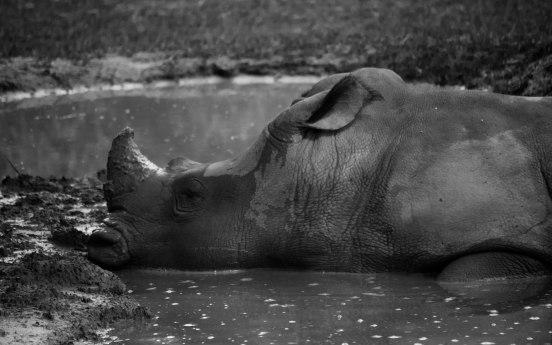 Rhinoceros Desktop