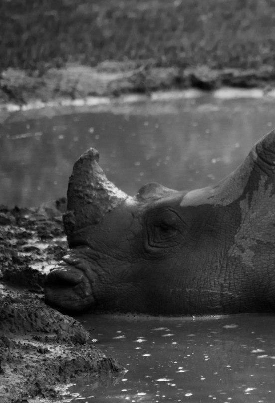 Rhinoceros iPhone